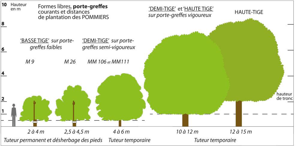 Patrimoine fruitier biodimestica - L arbre le pommier ...
